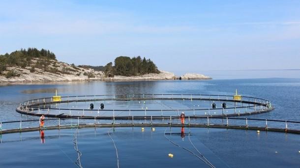 élevage saumon