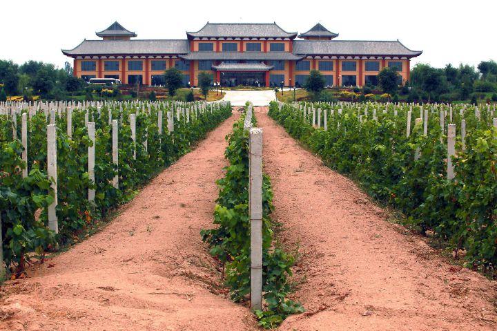 Vigne chine