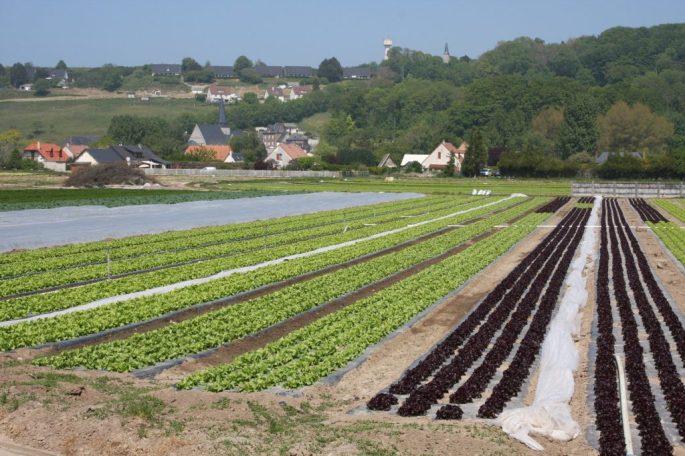plastiques-en-agriculture-1024x683
