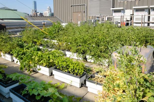 Agri urbaine 2