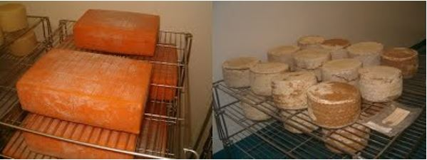 Fromages maturation