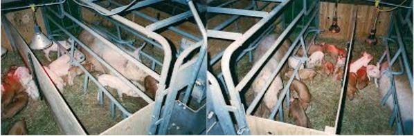 Porcs bio2