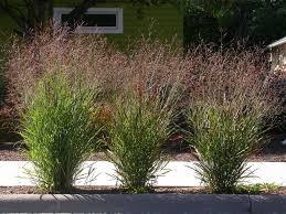 plantes bioplastique