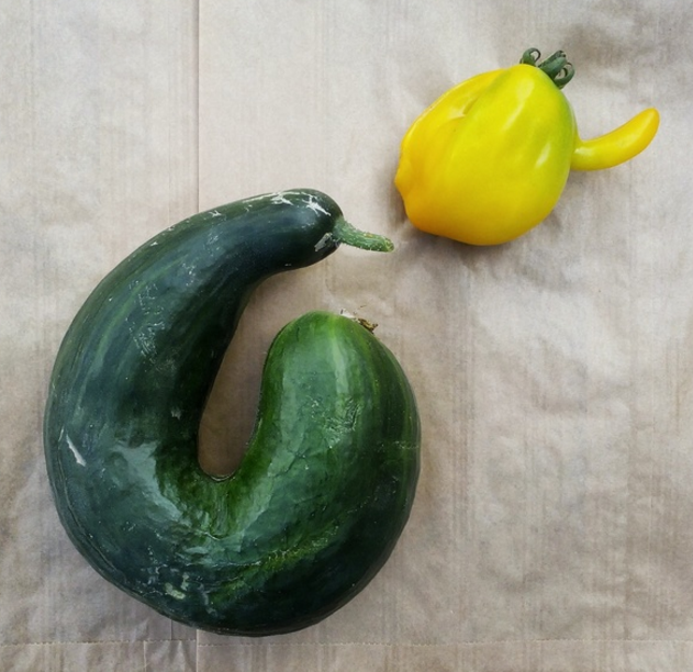 legumes moches