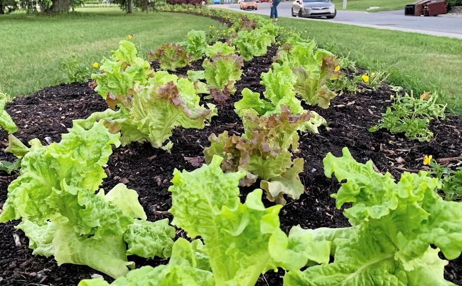 Légumes ville 2